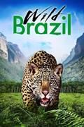 ველური ბრაზილია (ქართულად) / Wild Brazil / veluri brazilia (qartulad)