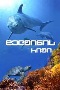 დელფინის რიფი (ქართულად) / Dolphin Reef / delfinis rifi (qartulad)